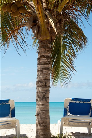 iPhone Wallpaper Palm trees, chaise, sea, sunshine, shadow