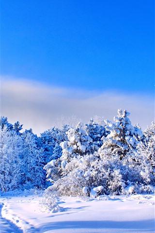 iPhone Papéis de Parede Inverno, neve grossa, árvores, céu azul, sombra
