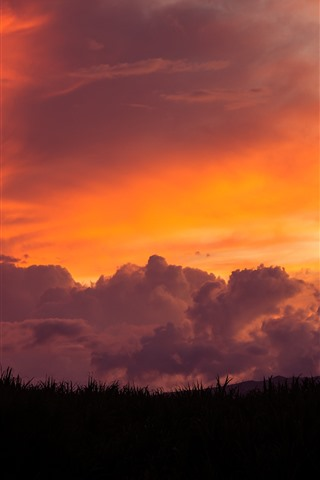 iPhone Wallpaper Maui, grass, red sky, clouds, sunset