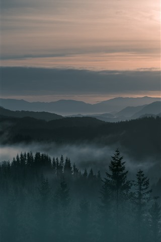 iPhone Wallpaper Norway, mountains, fog, forest, sunrise, morning