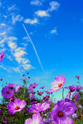 iPhone Wallpaper Pink flowers, blue sky, clouds