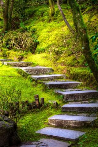 iPhone Wallpaper Portland, steps, park, water, trees, moss