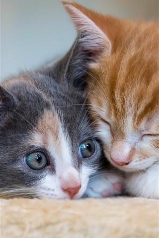 iPhone Wallpaper Two kittens sleeping, cat