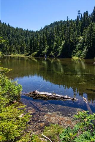 iPhone Hintergrundbilder Alaska, Summit See, Bäume, USA
