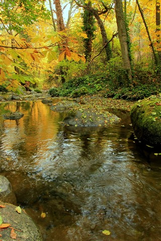 iPhone Wallpaper Autumn, forest, trees, stones, moss, creek, water