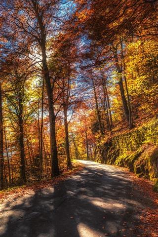 iPhone Обои Осень, деревья, дорога, солнечные лучи, желтые листья
