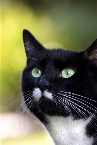 iPhone Hintergrundbilder Schwarze Katze, Gesicht, grüne Augen, Blick, dunstiger Hintergrund