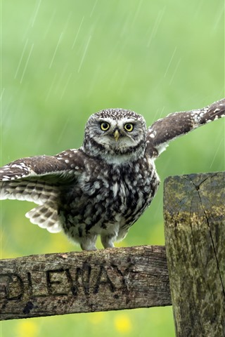 iPhone Wallpaper Cute little owl, wings, wood, rainy