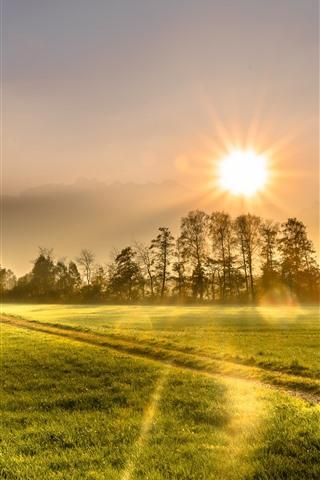 iPhone Обои Утро, поле, деревья, дом, зеленый, солнечный свет