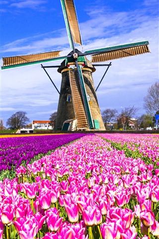 iPhone Fond d'écran Pays-Bas, Windmill, Tulips Field