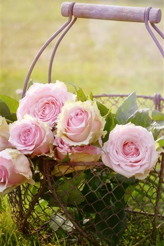 iPhone Обои Розовые розы, цветы, корзина, трава