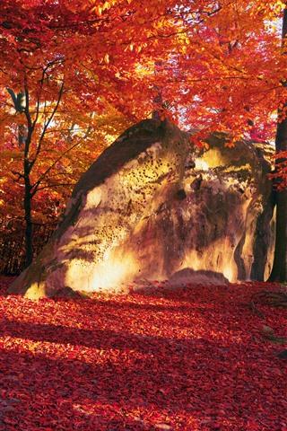 iPhone Обои Красные листья, деревья, камень, осень