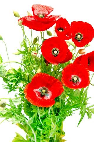 iPhone Fond d'écran Fleurs de pavot rouge, feuilles vertes, fond blanc