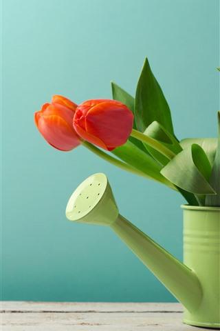 iPhone Обои Красные тюльпаны, чайник, зеленый