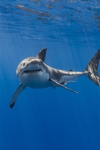 iPhone Hintergrundbilder Hai, Mund, Zähne, Unterwasser, Meer
