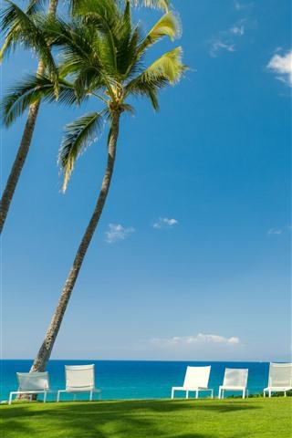 iPhone Обои Тропическое, море, пальмы, стулья, луг