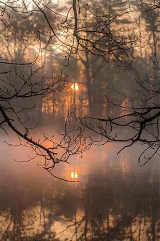 iPhone Hintergrundbilder Zweige, Fluss, Nebel