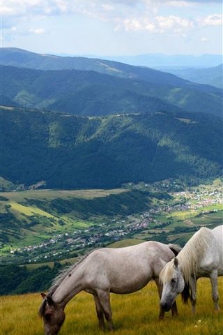 iPhone Обои Две лошади, склон, горы, долина, деревня