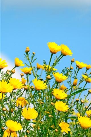 iPhone Fond d'écran Fleurs jaunes, fleurs sauvages, ciel bleu, printemps