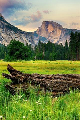 iPhone Fond d'écran Parc national de Yosemite, arbres, montagnes, bois, USA